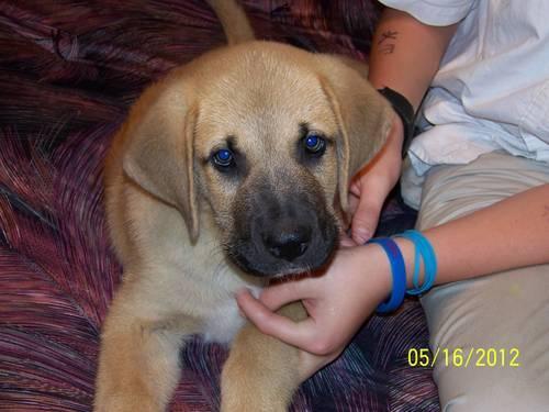 Bernadane Puppy
