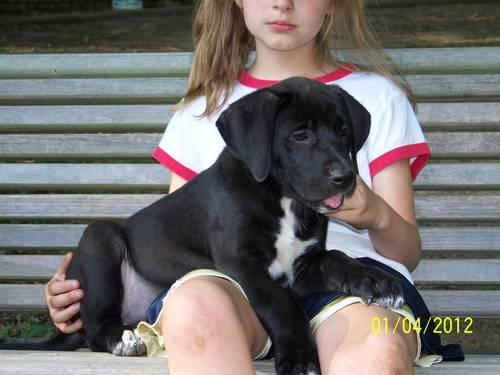Bernadane Puppy,