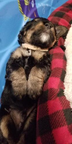 Pets And Animals For Sale In Beloit Wisconsin Puppy And