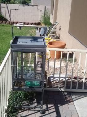 Bird cages and English budgies (parakeets)