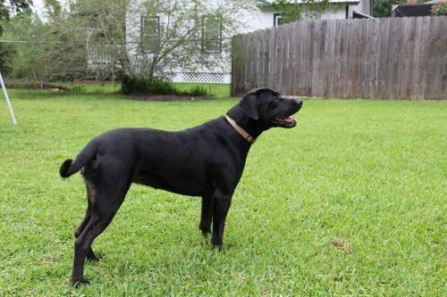 Black Dog Rescue Ct