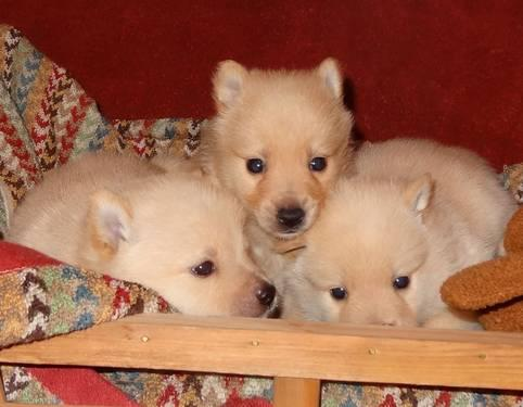 Pets And Animals For Sale In Cologne Minnesota Puppy And Kitten