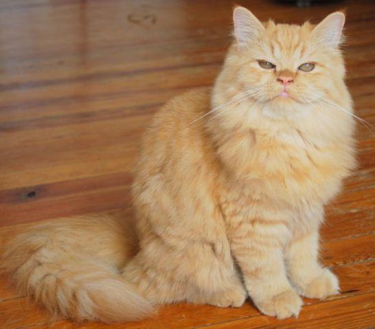 walmart cat food