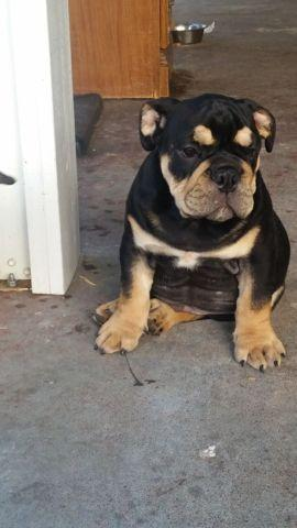 Pets And Animals For Sale In Ontario California Puppy And Kitten