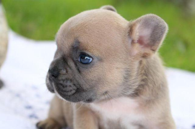 Pets And Animals For Sale In Mesa Arizona Puppy And Kitten