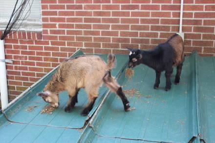 Contoh Soal Hukum Kekekalan Momentum Baby Pygmy Goats For Sale In Nc