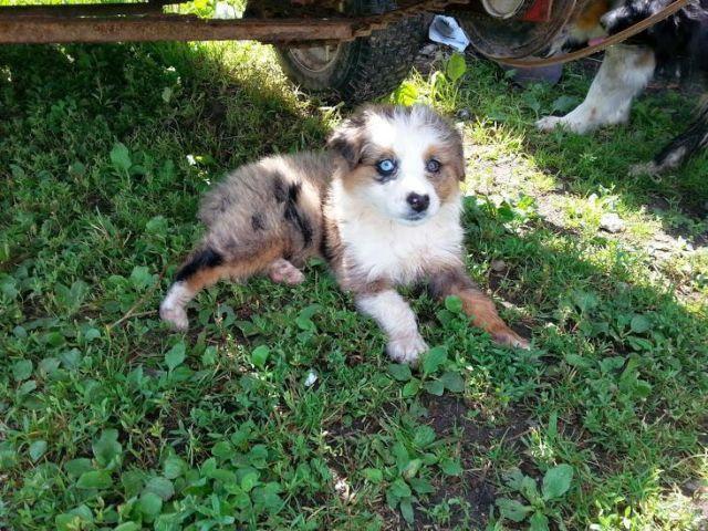 Is A Dog Breeding Company Classified As A Farm