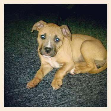 Pets And Animals For Sale In Gardner Massachusetts Puppy And