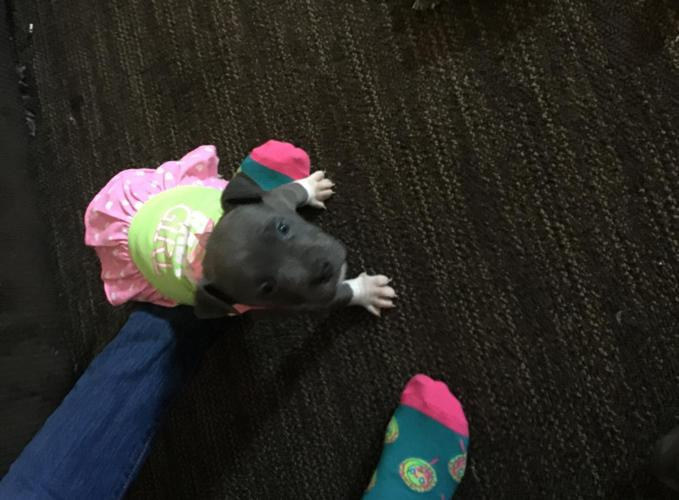 Puppies for Sale Md - Pet Stores   Baltimore- Annapolis ...