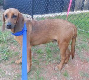 Dogs For Sale In Kingsport Tn