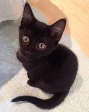 Philadelphia Cat Adoption Center