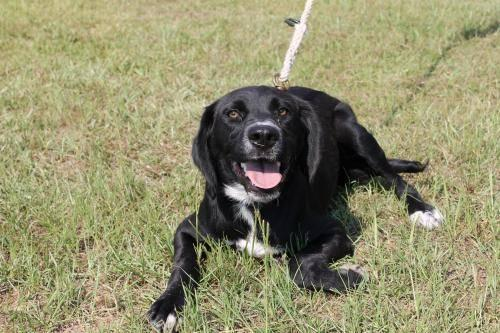 Border Collie - Gemma - Medium - Young - Female - Dog