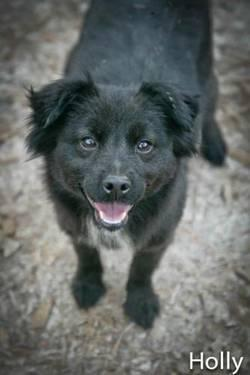 Border Collie - Lena - Medium - Young - Female - Dog