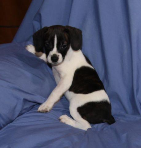 Terrier rescue richmond va