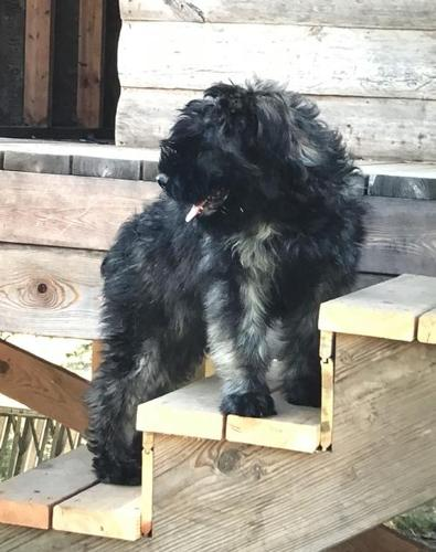 Pets And Animals For Sale In Moyie Springs Idaho Puppy And Kitten