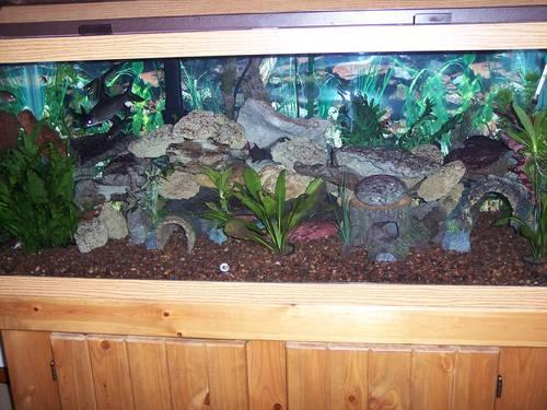 brand new reptile cages and fish tanks