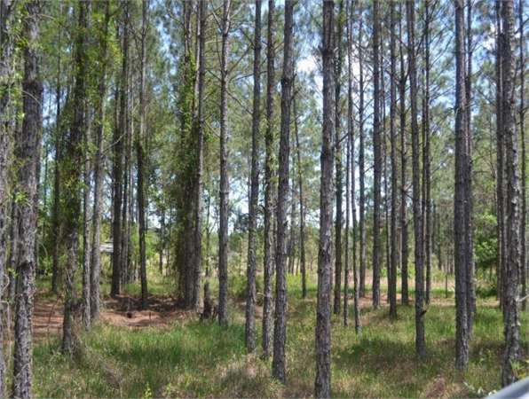 Bronson, FL Levy Country Land 20.00 acre