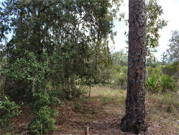 Bronson, FL Levy Country Land 4.690000 acre
