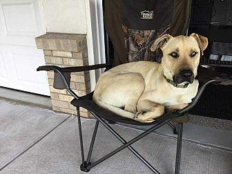 Bruce Black Mouth Cur Adult Male