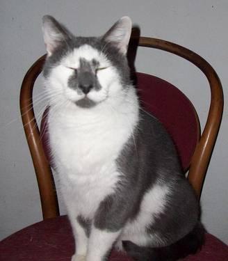 cat scratch nail file
