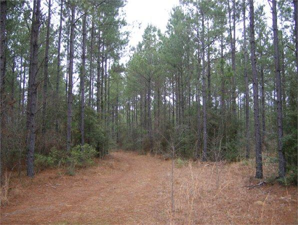 Chatom, AL Washington Country Land 880 000000 acre for Sale