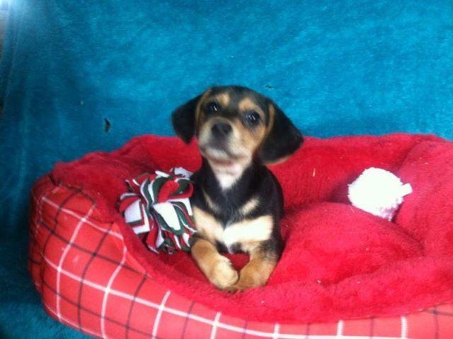 Pets And Animals For Sale In Cresco Pennsylvania Puppy And Kitten