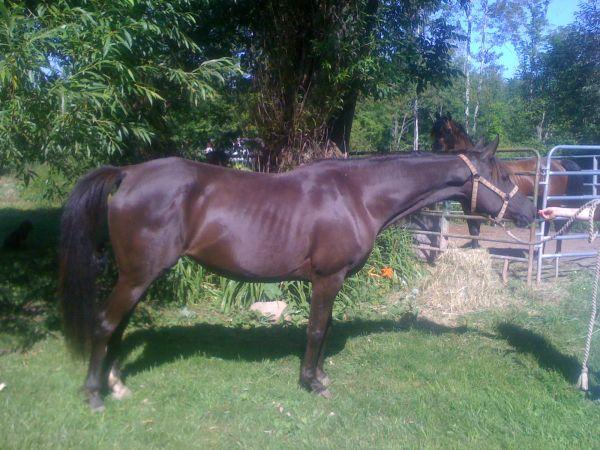 cheap registered horses for sale need to sell asap