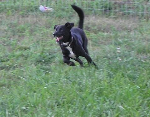 Chihuahua - Priscilla And Presley - Small - Senior -
