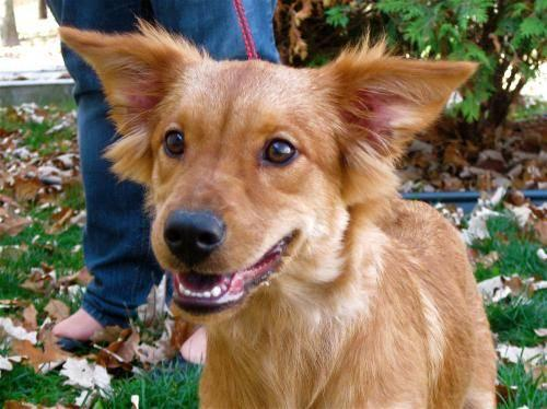 Small Female Dog Marion Indiana