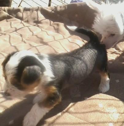 Puppy Stuff For Sale In Rincon Ga Claz Org