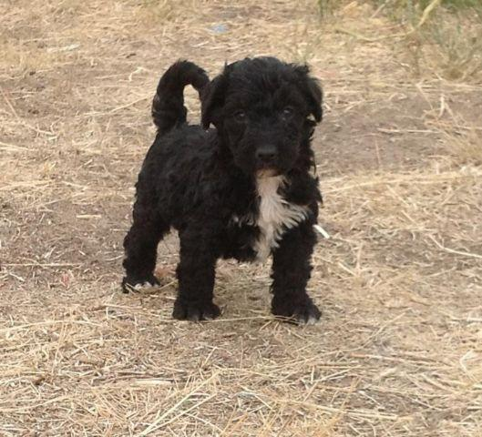 Dogs For Sale In Idaho