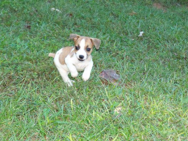 Pets And Animals For Sale In Lagrange Georgia Puppy And Kitten