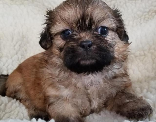 Pets And Animals For Sale In Wilmington North Carolina Puppy And