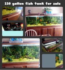 clean 230 - 250 gal. fish tank