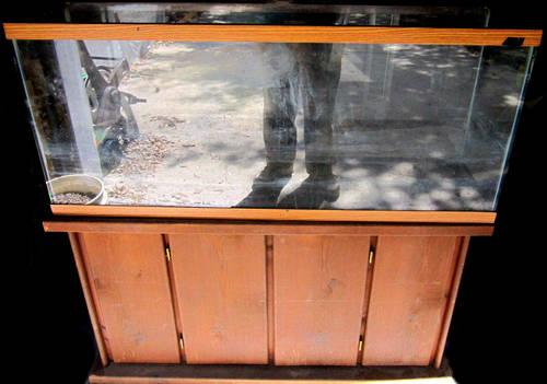 Clean 55 gallon fish tank with stand and lights obo for for 55 gallon fish tank stand