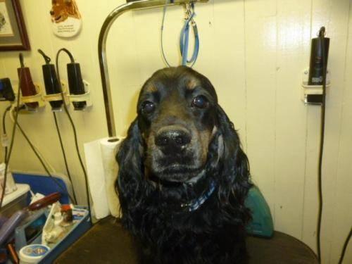Dog Training In Kokomo Indiana