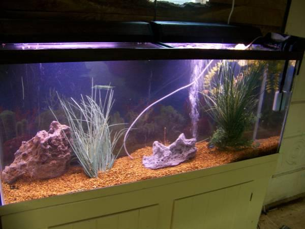 Complete 55 gallon setup w canopy stand lights filter l for 55 gallon fish tank setup