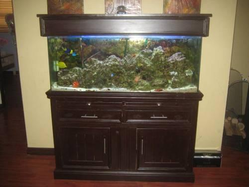 Complete nice 55 gal saltwater aquarium brown stand fish for 55 gal fish tank stand