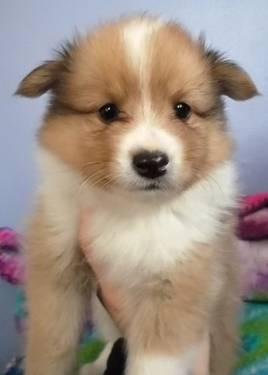 small mixed breed puppies for sale