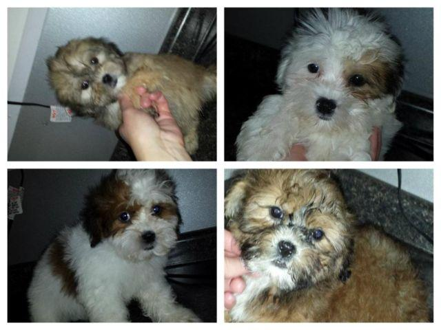 Cute teddybears for sale 400 males 450 females