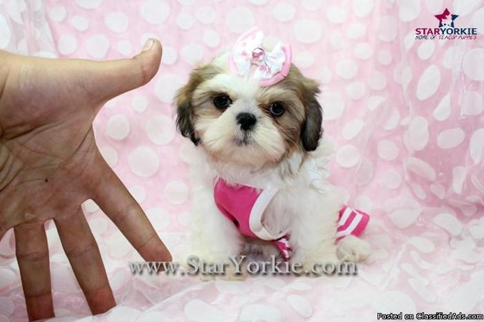Shih Tzu Puppies Las Vegas For Sale