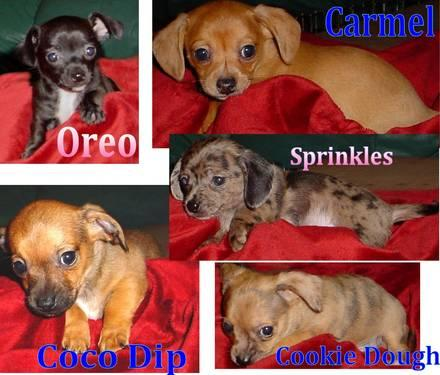 Buy electric toothbrushesThe chiweenie puppies for sale in oregon this