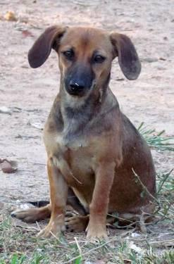 Ark Classified Dogs For Adoption