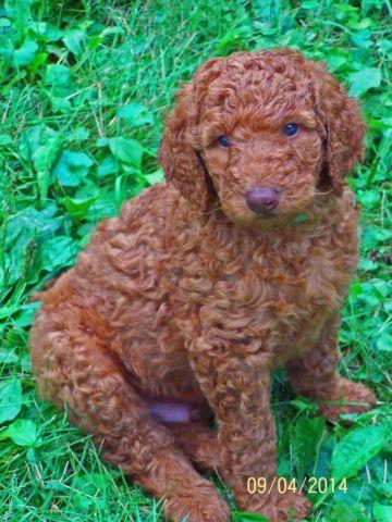 Pets And Animals For Sale In Prairie Grove Illinois Puppy And