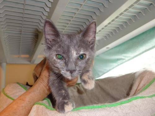 lavender cat - photo #24