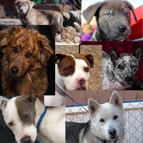 dog adoption new mexico