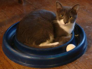 Darby S Place Cat Rescue Md