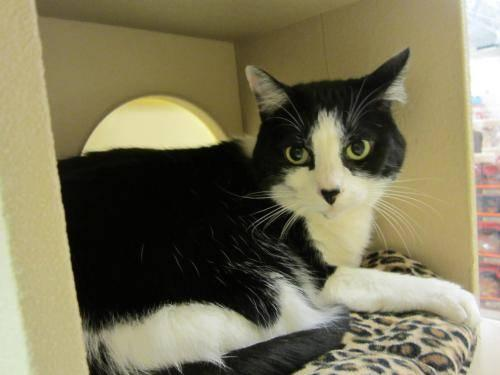 Adopt A Cat From Petsmart Comes With Insurance