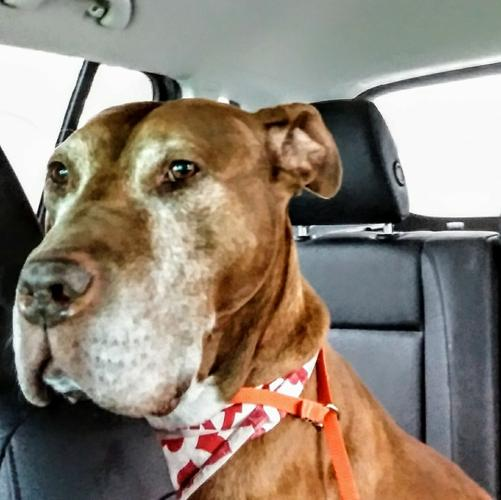 Pit Bull Rescue Indianapolis Indiana