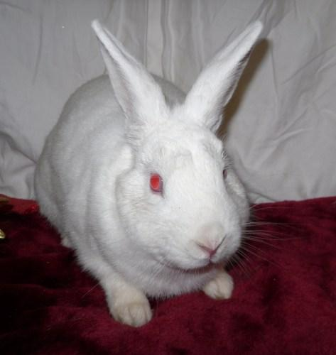 Easton Florida White Adult - Adoption, Rescue